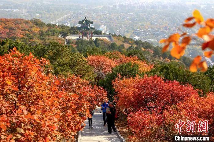 资料图:北京西山国家森林公园的红叶。何建勇 摄