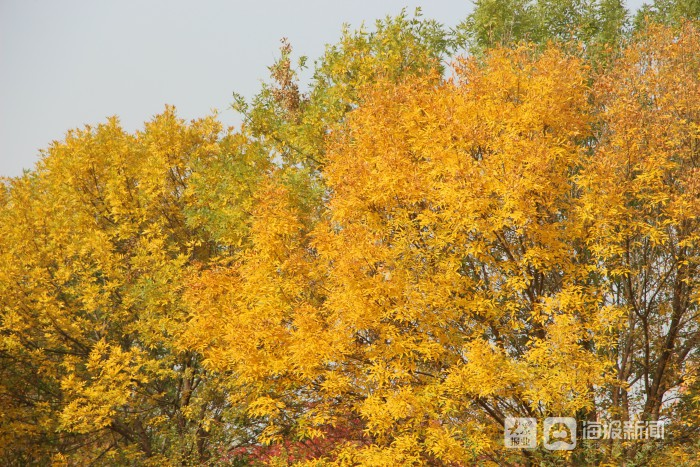 i东营·影像 金秋时节 带你领略垦利秋天的颜色