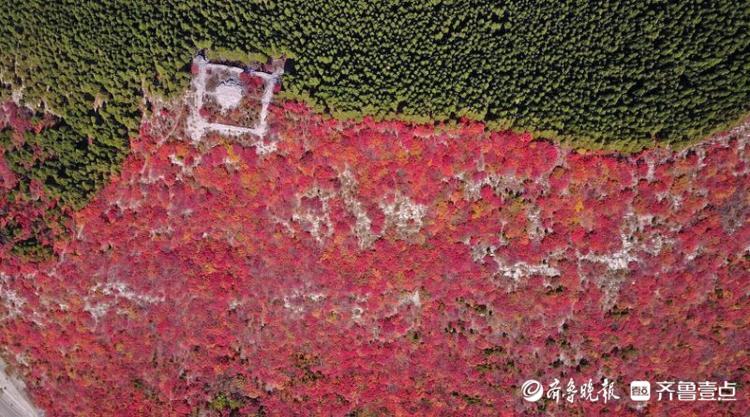 济南那座半红半绿的山又开始卖萌了!