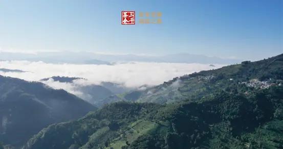三千茶农2020普洱老寨溯源之旅将在云南·西双版纳举行