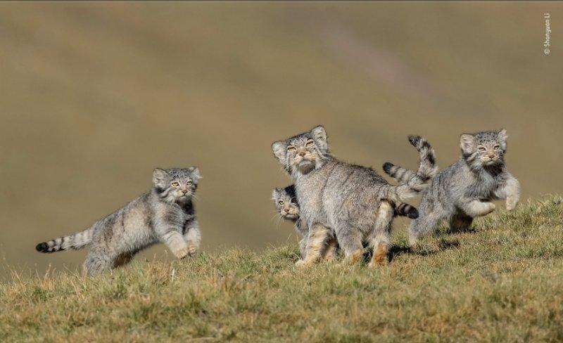 """获野生动物摄影""""奥斯卡""""奖的李善元:自然生灵值得尊敬和保护图片"""