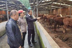 中国农业大学和天津市农业科学院专家来川调研指导蜀宣花牛产业发展