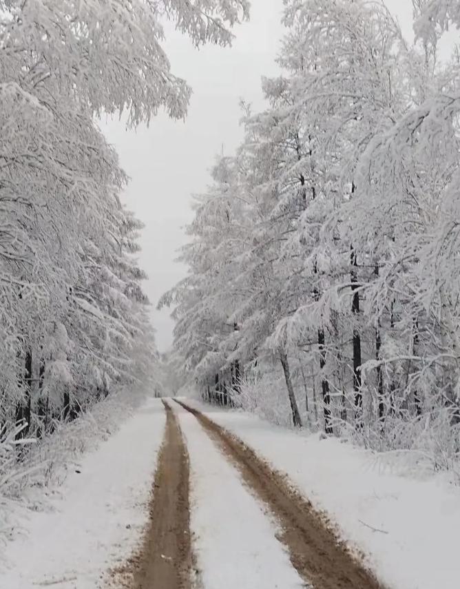 呼伦贝尔!大雪到来,漫山遍野披银装~
