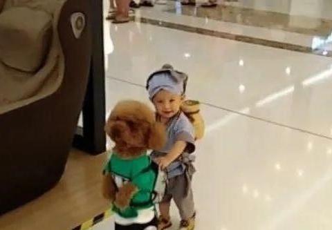宝妈带着儿子和泰迪逛商场,引得众路人笑声不断,纷纷拍照