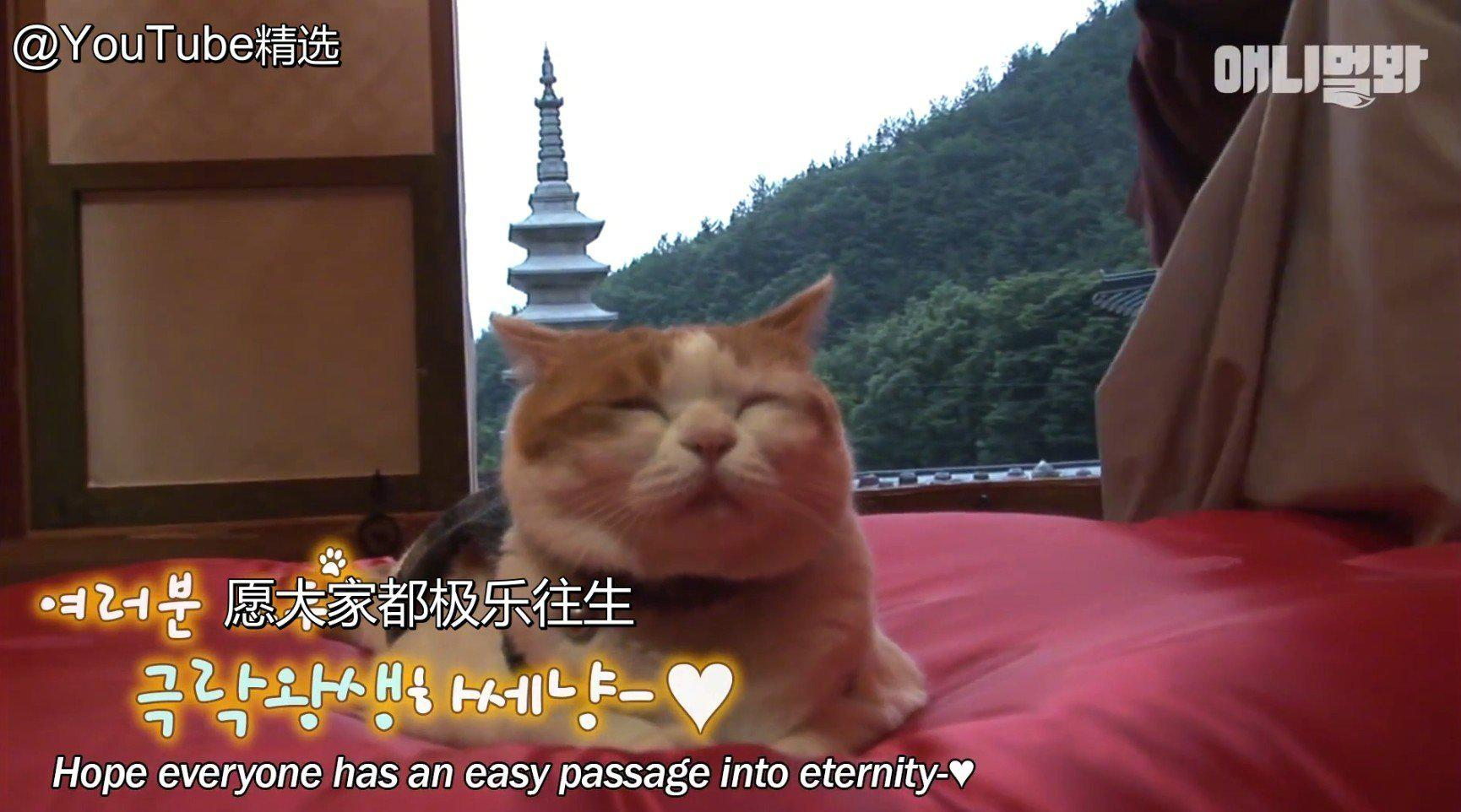 """真正的""""佛系猫咪"""",直接住在了佛堂里"""
