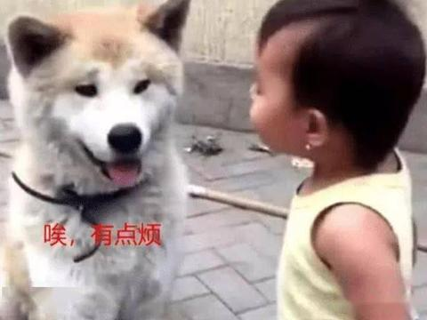 儿子正在教训狗狗,突然狗子一个转头,场面瞬间笑喷了