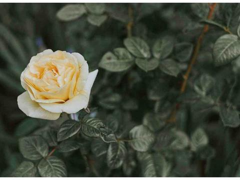 生肖猴:10月中旬的爱情运势相当强势,桃花朵朵开,好运接二连三