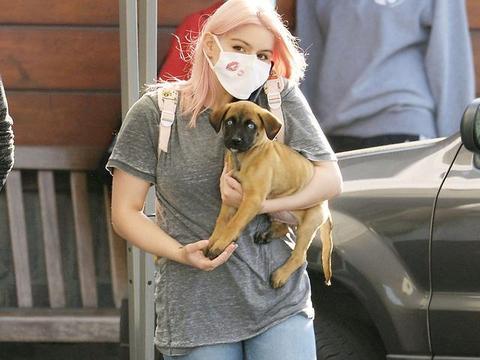 女星阿芮尔·温特现身洛杉矶街头,她抱的小狗很可爱