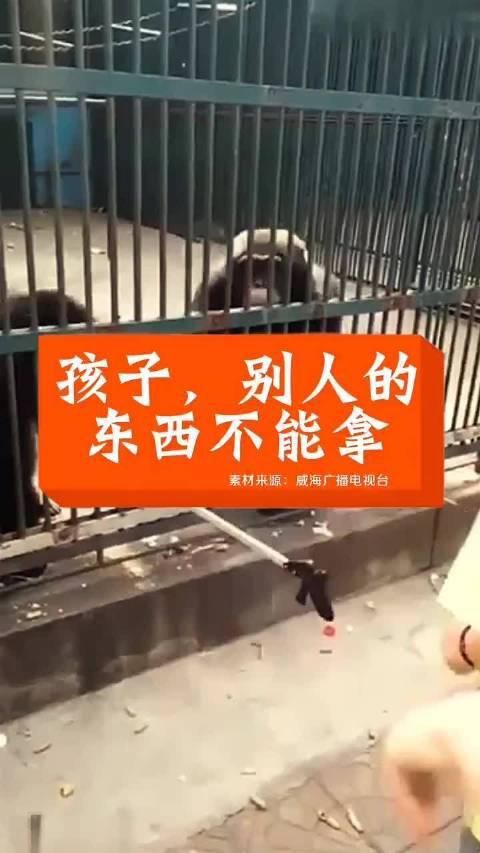 游客自拍杆儿被小猩猩抢走,猩猩妈妈将自拍杆归还!