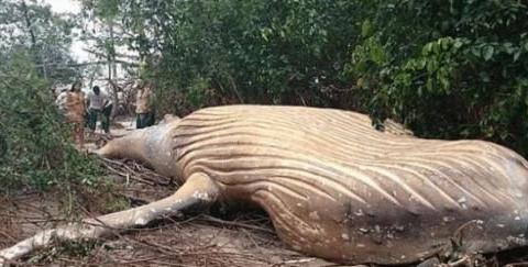 亚马逊丛林发现体长12米巨兽,专家:来自海洋,且未成年