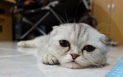 """送养猫咪需谨慎,因为你的无情,会给它带来8大""""伤害"""""""