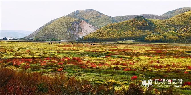 秋冬同框:雪落香格里拉 高原美若仙境
