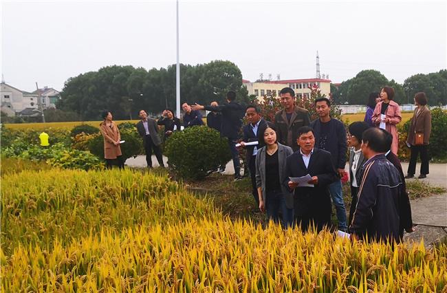 2020年句容市水稻绿色高质高效创建示范方现场观摩会在边城召开