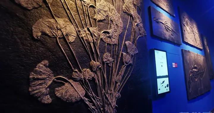 """「国际化石日」到自然博物馆与化石打个""""招呼"""""""