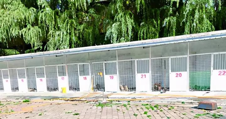鹤壁市整治不文明养犬,市民叫好同时有疑问:捕捉的流浪狗送到哪儿了