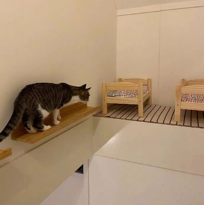 利用房间空闲位置,给两猫做了个卧室,还有两张床,猫好喜欢!