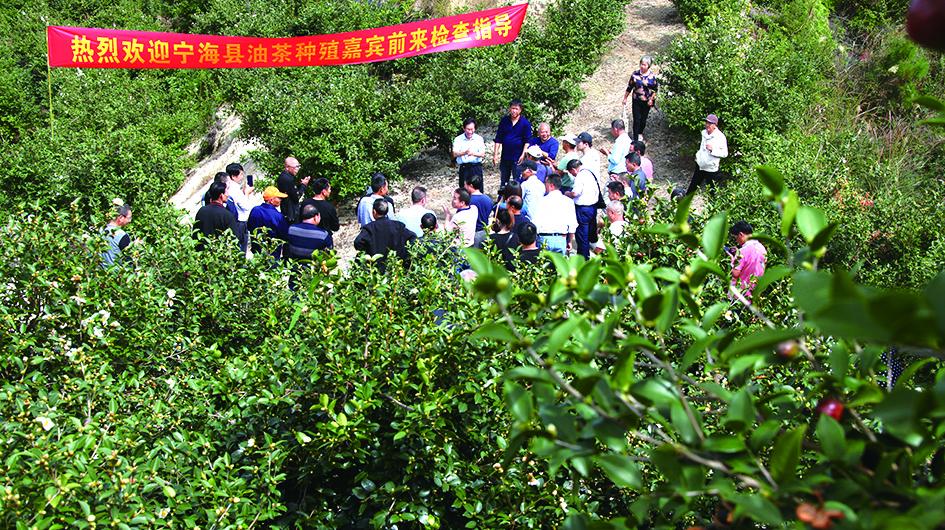 宁海县油茶农在上张乡俊雄农场油茶基地参观取经