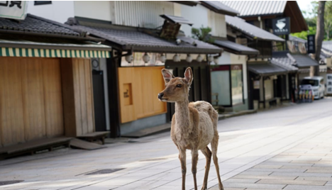 拯救小鹿!日本奈良鹿误食塑料袋死亡事故频发 日企推出可食用纸袋