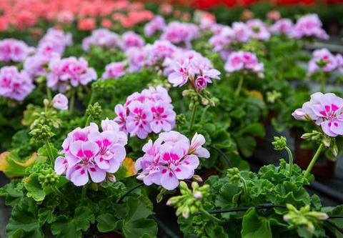 深秋养上4种花,大气上档次,叶绿开花艳,是家庭盆栽佳品!