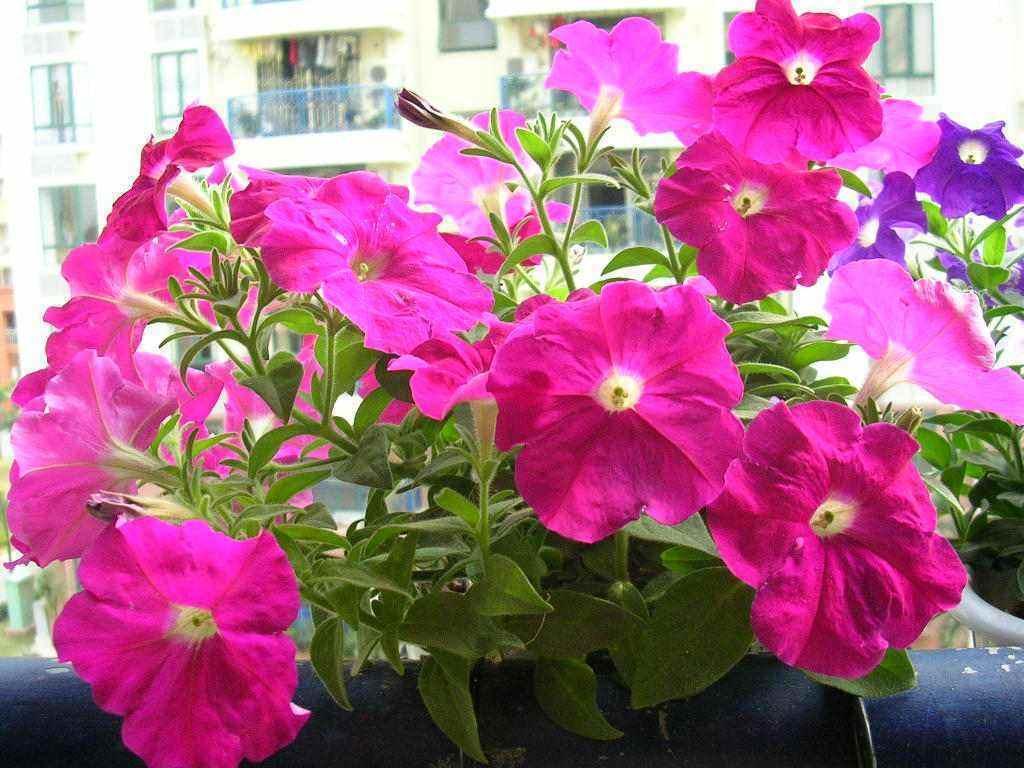 十月天朗气清,适合养这3种花,一株幼苗能开一片花