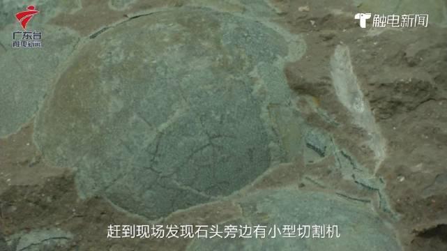 河源两男子盗窃恐龙蛋化石被缴获32枚