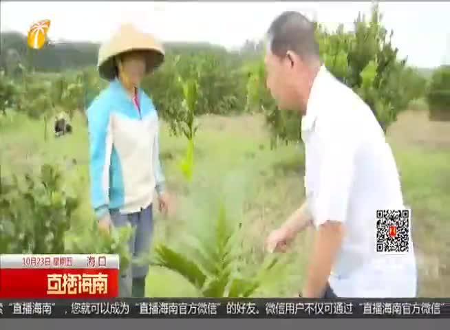 """防御""""沙德尔"""":雨后作物施肥有讲究 排水松土清枝不可少"""