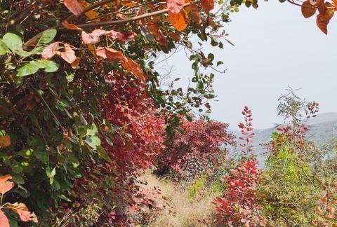 济南这条公路不止有古村落,自然景观也不落下风,一天时间足够了