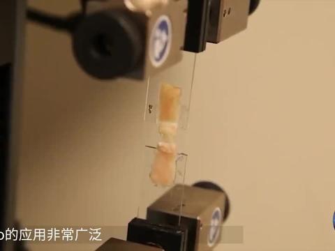超良心的该科技胶水,只要在伤口上一抹,一分钟就能愈合!
