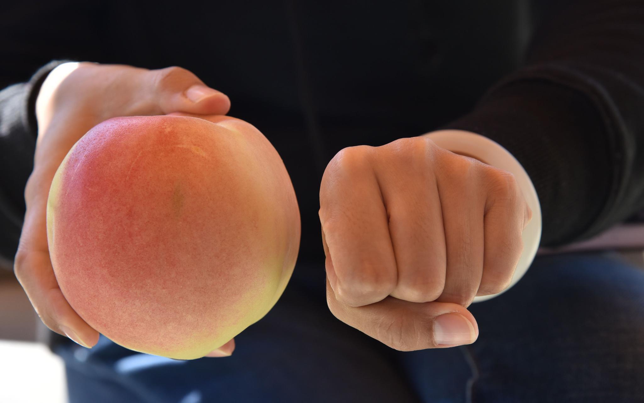 桃子能有通俗人拳头那么大。受访者供图
