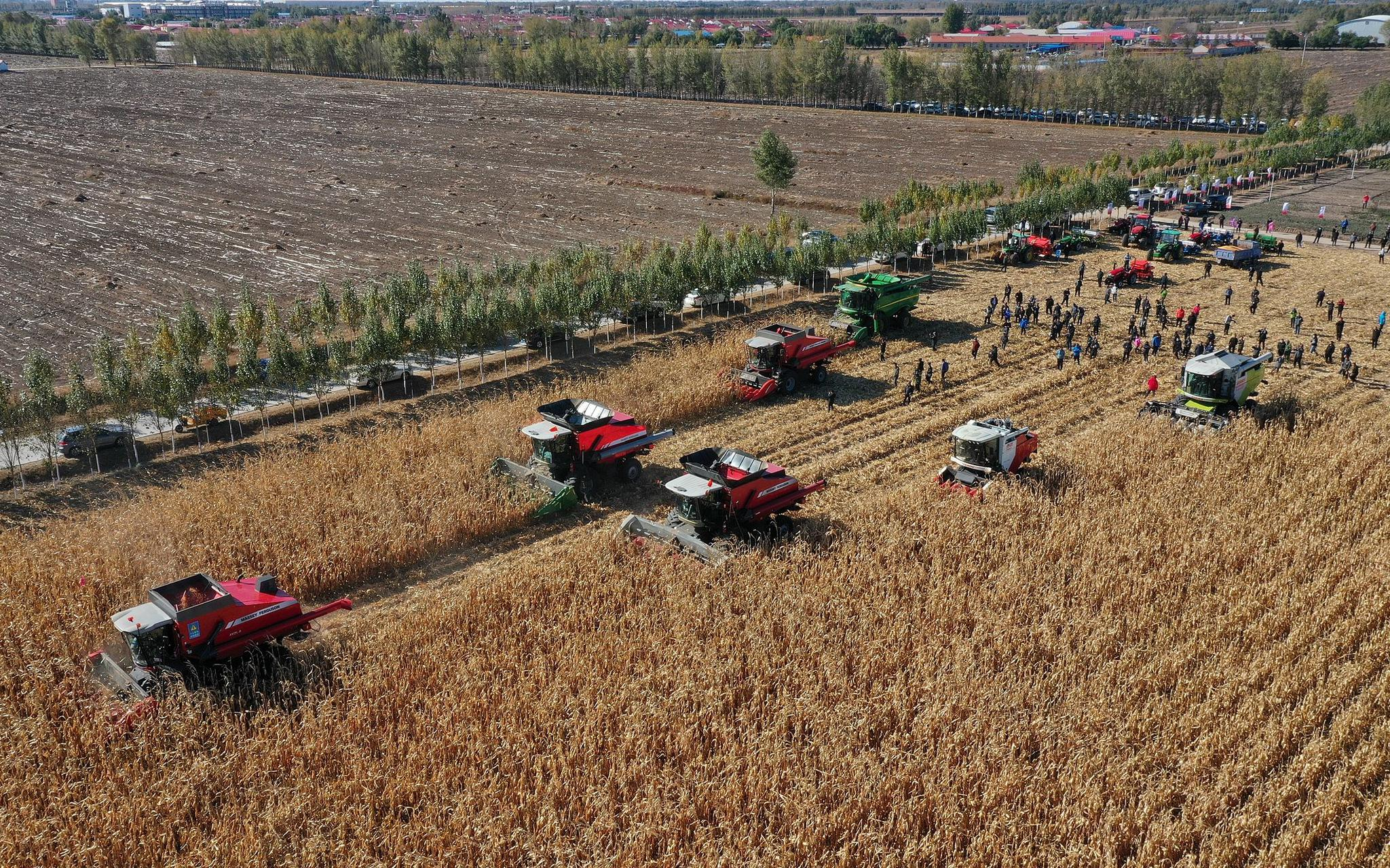 亩产1234.88公斤 东北玉米机械粒收创新纪录