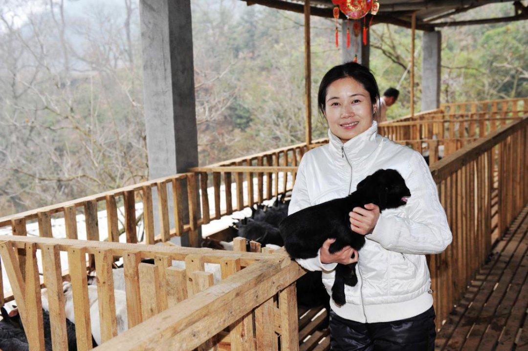 """刘锦秀:愿做大别山区精准扶贫""""领头羊"""