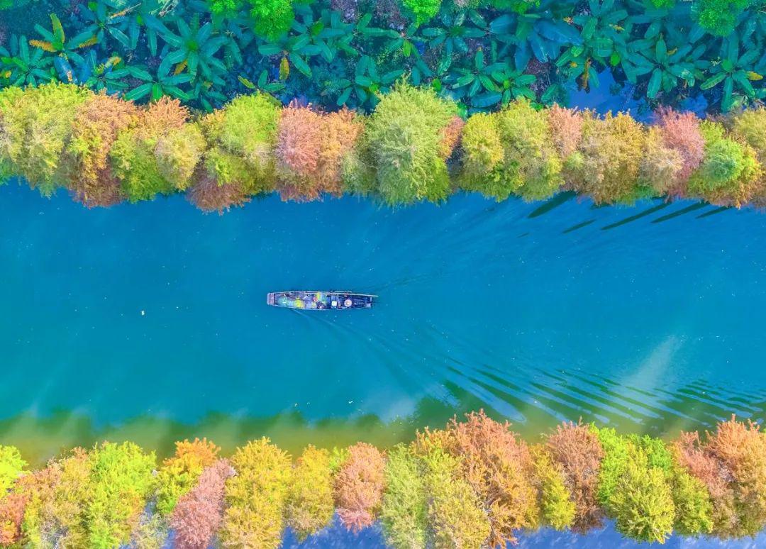 """颜值霸屏!佛山藏着许多超美的""""水上森林"""",每一眼都是惊艳!"""