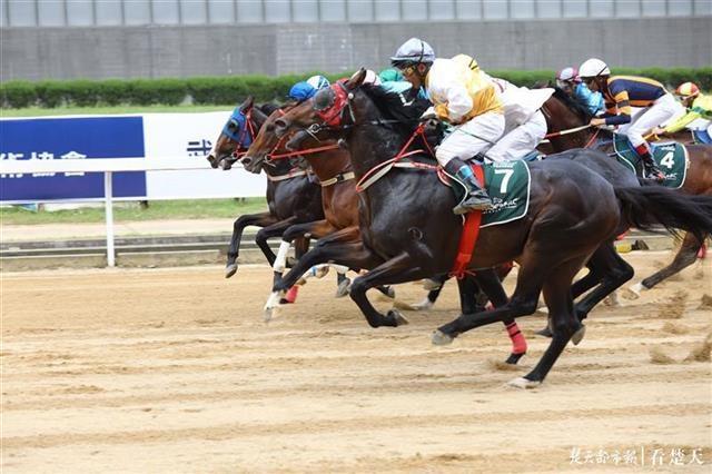 400余匹赛驹云集武汉,第十八届中国·武汉赛马节10月24日开锣