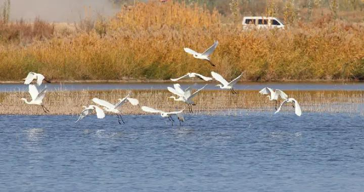 新疆阿瓦提公安:维护生态安全 守护绿水青山