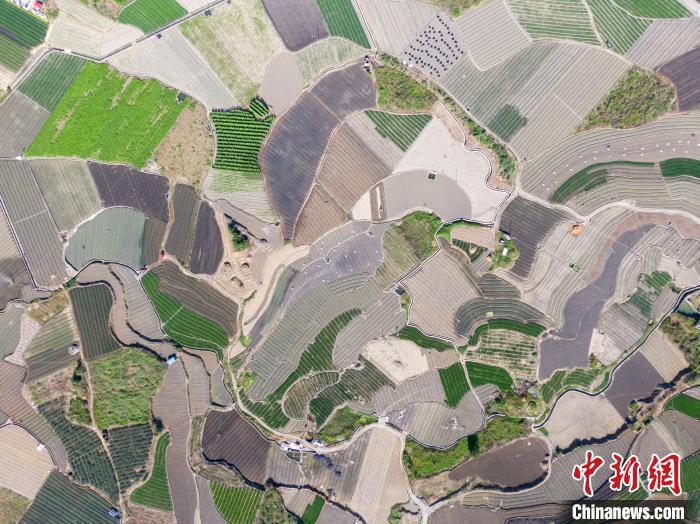 航拍中国西南部最大香葱种植基地 大地如绿色拼图