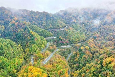 赏景正当时 四川这些景区适宜看红叶