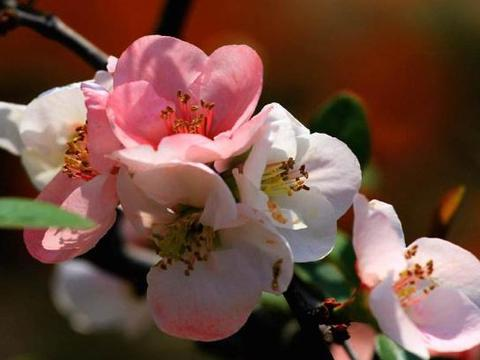 """春季养""""此花"""",1个""""小技巧"""",3个月疯长到爆盆,花朵真鲜艳!"""