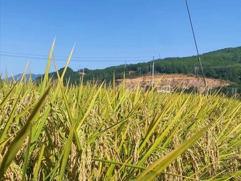 国家级一等奖作文《稻米的故事》,充满了蓬勃的热情和能量