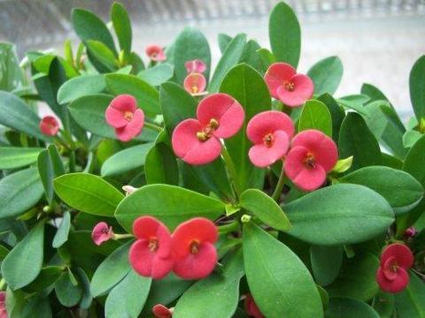 3种花卉其貌不扬,养护很省心,多晒太阳少浇水,植株健壮开花美