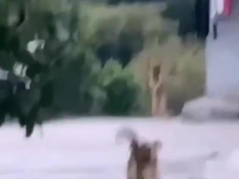 说出来你可能不信,我家狗会跳江南style。