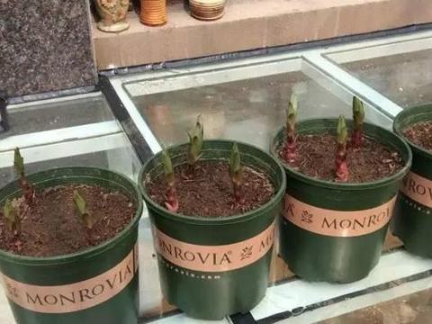 这3样东西甭扔了,制成肥料养花,既方便又好用,还能省钱