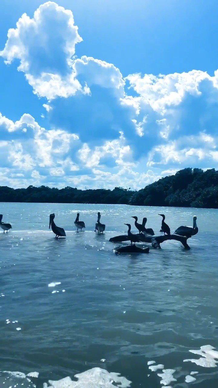 尤卡坦半岛大湿地每年6到8月有2万多只火烈鸟