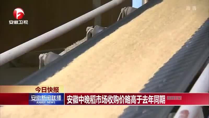 安徽中晚稻市场收购价略高于去年同期