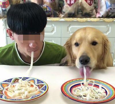 男子和家里的宠物狗一起直播吃面条,接下来的一画面,让人笑喷啦