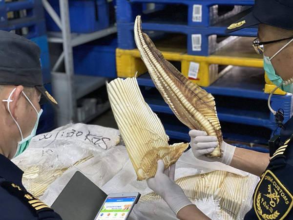 1979公斤深海长尾鲨鱼骨混进干鱼骨头堆 企图蒙混进境被查获