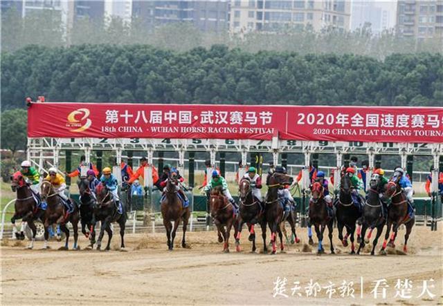 400余匹赛驹汇聚武汉!第十八届中国·武汉赛马节开锣