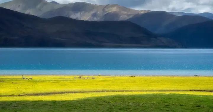 """免费/半价2020""""冬游西藏""""福利已开启,错过等一年"""