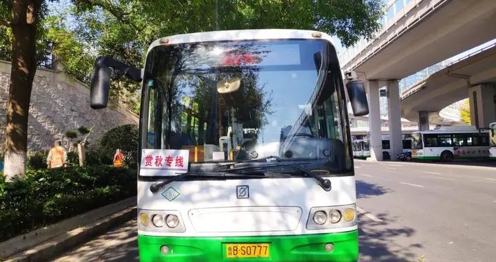第36届菊花展开幕 青岛多条公交线路将开出赏秋专线车
