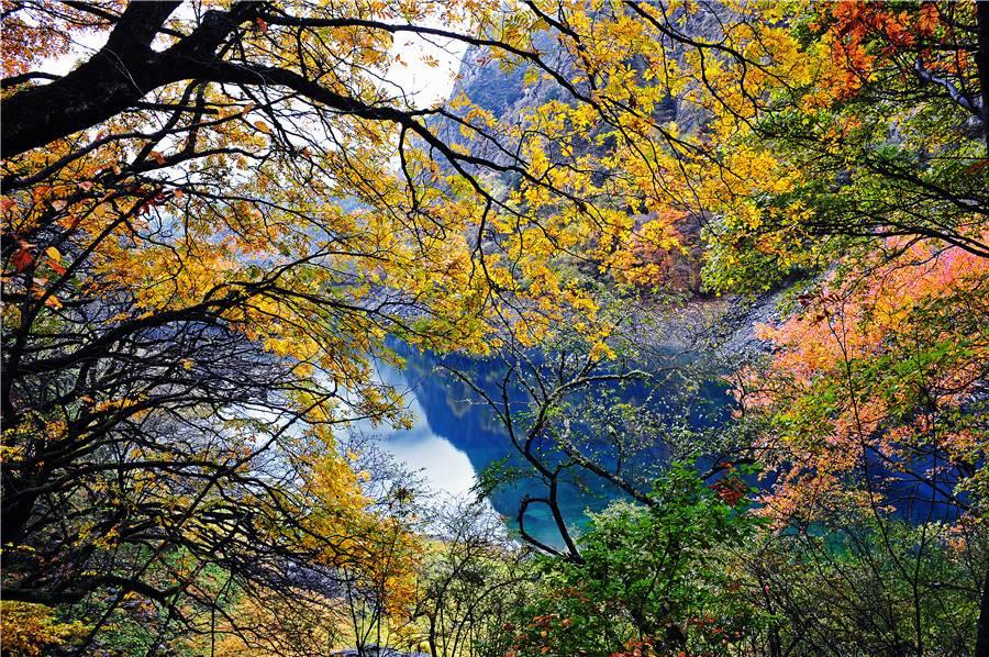 你打卡秋天的彩林了吗?四川叠溪松坪沟景区迎来红叶彩林最美观赏期