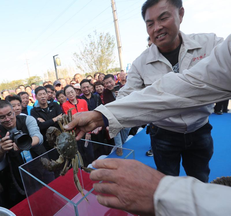 蟹王九两二、蟹后六两六,宝山罗泾大闸蟹丰收,一个村销售额预计1.8亿元
